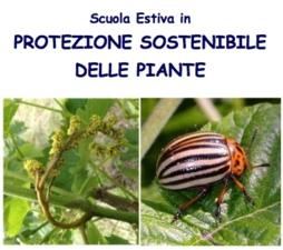 Protezione sostenibile delle piante, al via la Scuola estiva
