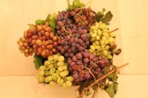 20° Congresso nazionale dell'uva da tavola