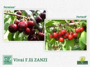 Vivai F.lli Zanzi apre le porte alle novità sul ciliegio