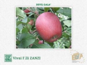 Devil Gala*, la mela estiva cambia pelle
