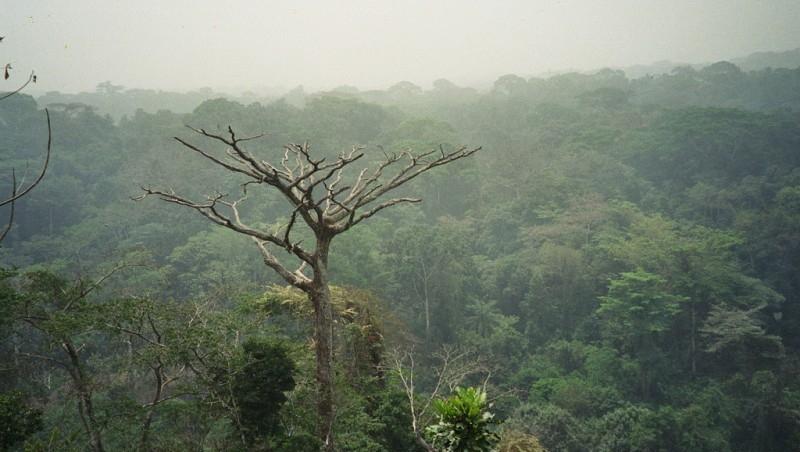 foresta-congo