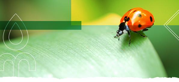 Biologico: supportare le imprese agricole nella scelta e nel corretto uso dei prodotti per la nutrizione e la difesa