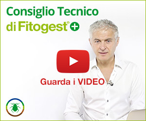 5 video per il Consiglio Tecnico di Fitogest+