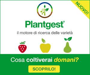 Il nuovo Plantgest è online: scoprilo ora