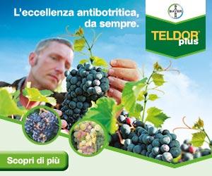 Teldor Plus: il tuo alleato contro la botrite