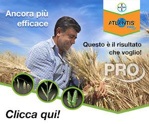 Scegli il PROgresso per il diserbo del grano