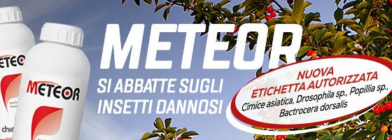 Nuova etichetta autorizzata per Meteor