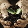 Biostimolanti in agricoltura: cosa sono e come agiscono