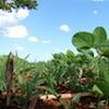 Il problema della gestione delle resistenze: un costo aggiuntivo per gli agricoltori