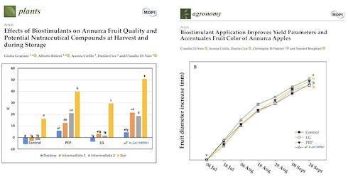 Grafico sugli effetti dei biostimolanti su mela Annurca