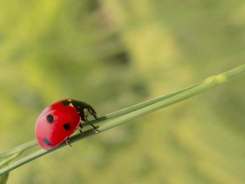 Agricoltura biologica, prodotti sani e sostenibili
