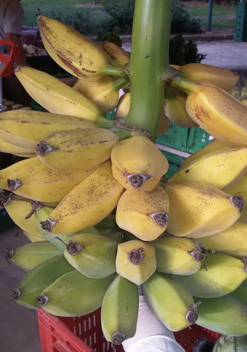 Oggi la cooperativa ha circa 3mila piante di banano
