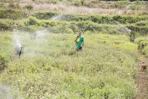 Mediante l'irrigazione si mantiene costante l'habitat ideale per le chiocciole