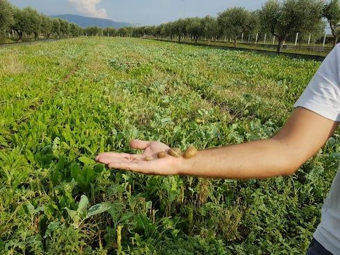 La dieta delle chiocciole consiste in foglie, verdure e pezzi di frutta