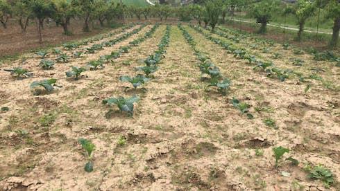 La concimazione organica deve essere effettuata almeno due volte all'anno
