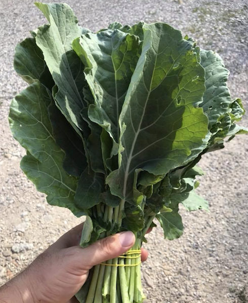 L'azienda la commercializza in mazzi di quasi 500 grammi. In estate con cinque, sei, sette foglie e in inverno ne occorrono un po' di più perché sono più piccole