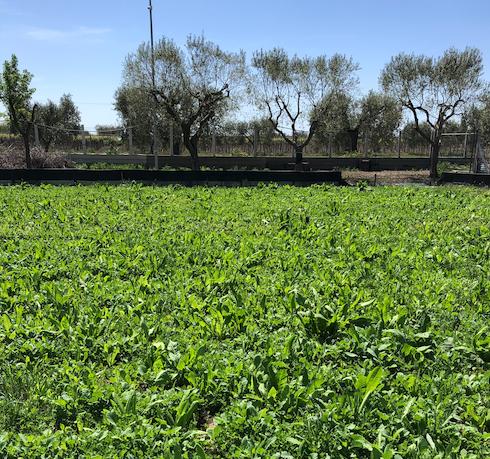 L'allevamento si estende su un terreno di 6mila metri quadrati