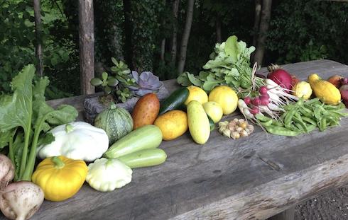 Nell'azienda agricola, oltre al mais glass gem, sono presenti più di duecento varietà fra ortaggi vari, tuberi e mais
