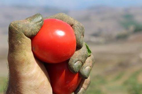 Il pomodoro siccagno ha un basso apporto calorico ed è ricco di sostanze antiossidanti