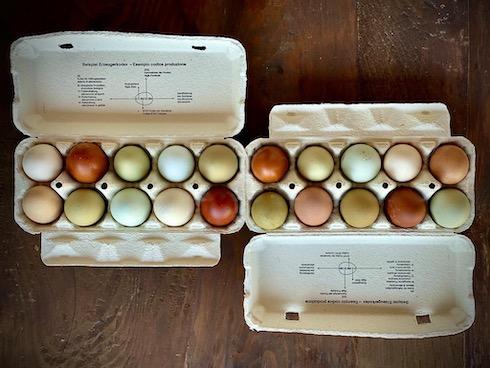 Come sostiene il titolare dell'azienda, le uova sono destinate atutti coloro che vogliono mangiare un prodotto sano, genuino, friulano ed ottenuto con metodi totalmente naturali