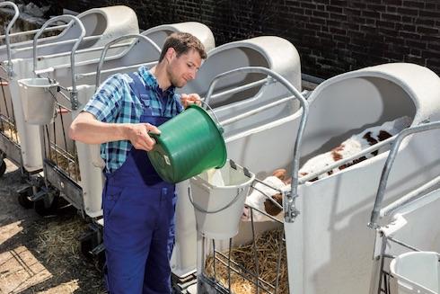 Se si ricorre all'utilizzo di latte artificiale, è necessario fare ricorso a un prodotto di qualità