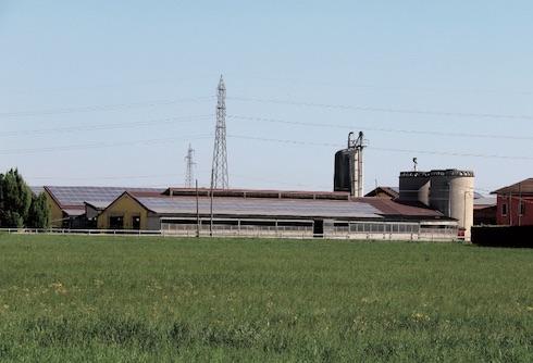Attualmente l'azienda munge 310 vacche, ma grazie alle ottime performance riproduttive, all'uso del seme sessato e alle minime mortalità in vitellaia, alleva in totale 700 capi