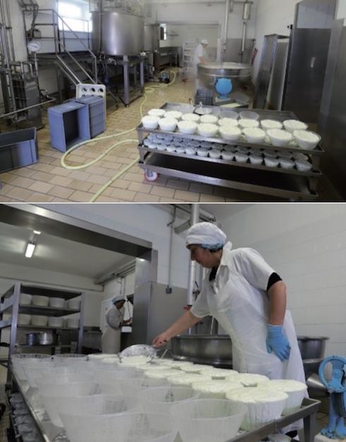 Dal caseificio aziendale escono formaggi, ricotte e caciottine aromatizzate