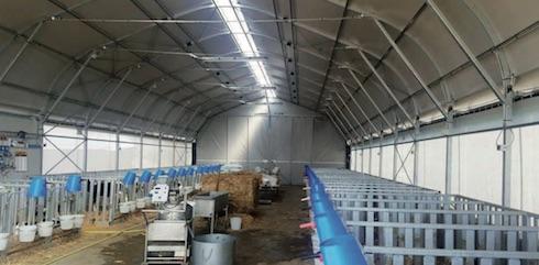 Un altro esempio di Farm tunnel vitellaia. Le giovani bovine vivono in un ambiente sanificato grazie a filtro sanitario e barriere igieniche