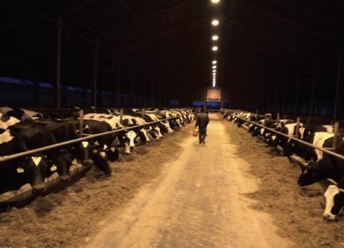 La Geo Friz munge 800 vacche ed è stata tra le prime aziende ungheresi ad essere cliente Tecnozoo