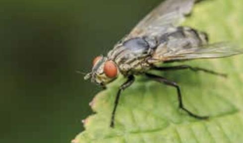 E' un errore intervenire soltanto quando le mosche sono già numerose e fastidiose