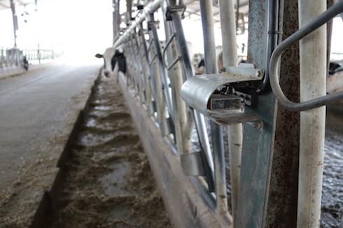 Uno dei sensori ottici montati lungo la rastrelliera del gruppo che ha beneficiato del sistema di raffreddamento DeLaval completo