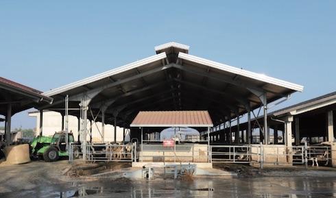 In stalla 350 vacche in mungitura con produzioni medie di 29 litri/capo