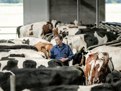 Con il suo programma di monitoraggio globale, Trouw Nutrition Italia propone un servizio basato su strumenti analitici e personale specializzato, per consigliare al meglio gli allevatori di vacche da latte