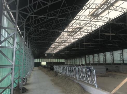 Un tunnel a gamba dritta per l'allevamento della vacca da latte