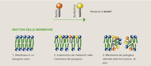 Produzione metaboliti