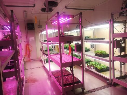 Uno dei laboratori della stazione sperimentale di Nunhems, ove nascono le idee del futuro