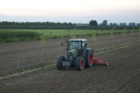 Un sistema silvoarabile con filari di pioppo ibrido e farnia piantati lungo le scoline aziendali