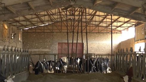 Molte stalle pericolanti vengono ancora utilizzate
