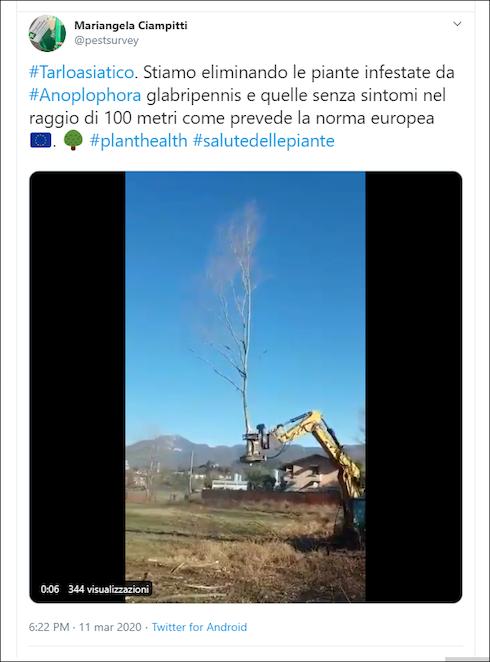 Tweet di Mariangela Ciampitti (Ersaf)