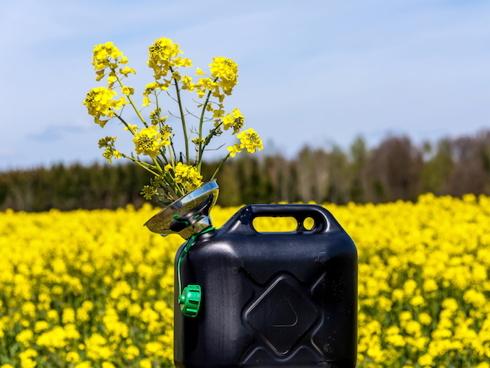 I biocarburanti sono in crescita in Italia: per Gse dal 2005 al 2017 sono cresciutidel 600%