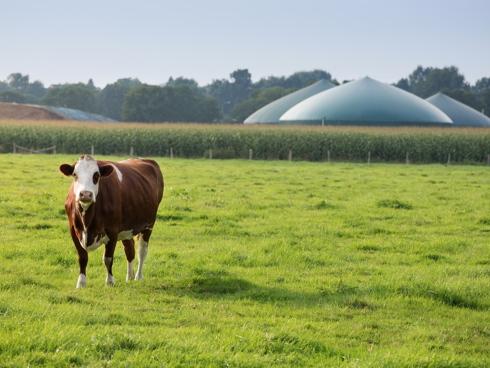 Impianto biogas come risorsa per produrre bioenergia