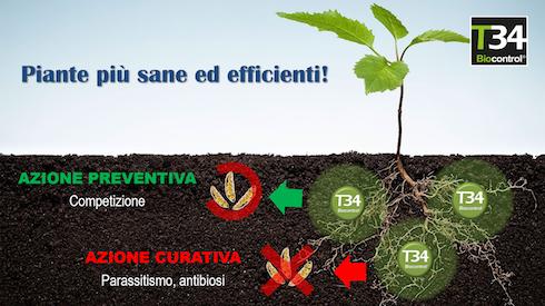 piante più sane