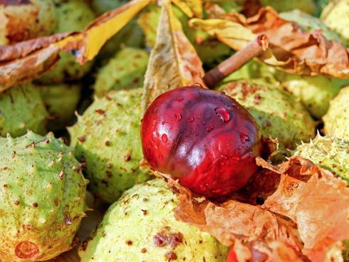 Castagno da frutto e castagno da legno, entrambi aspetti importanti