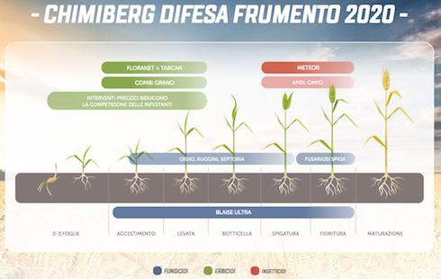 Il programma di difesa di Chimiberg per il frumento prevede una gamma di prodotti efficaci e affidabili per ottenere il massimo delle rese