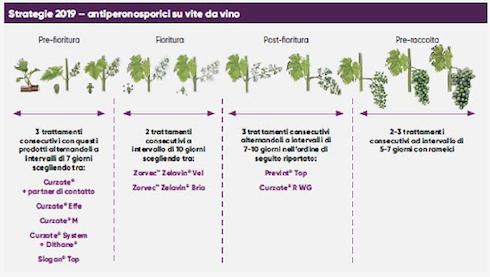 La linea vite di Corteva agriscience   AgroNotizie   Difesa e diserbo