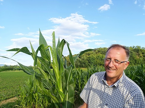 Giorgio Fidenato con una pianta di mais convenzionale duramente colpito dalla piralide di prima generazione