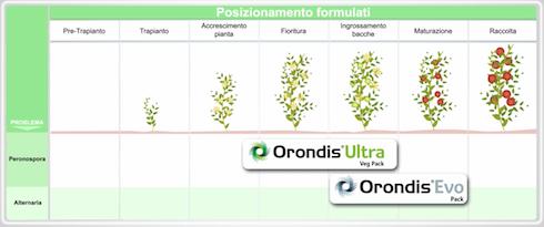 Tempistiche di impiego delle nuove soluzioni di Syngenta su pomodoro