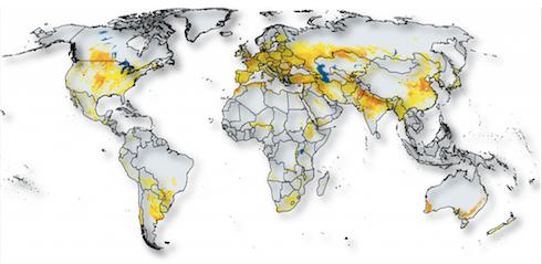 Coltivazione frumento nel mondo