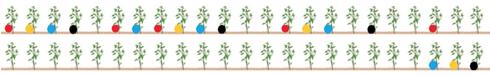 Grafico con distribuzione piante