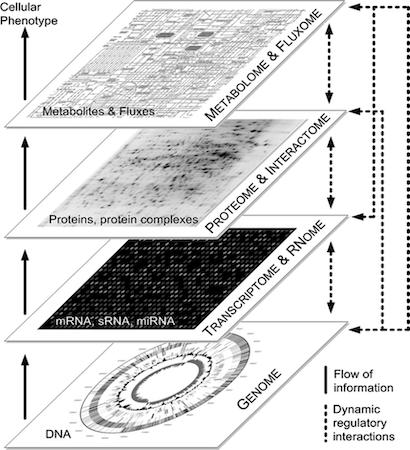 flusso delle informazioni
